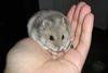 Hamster en mi mano
