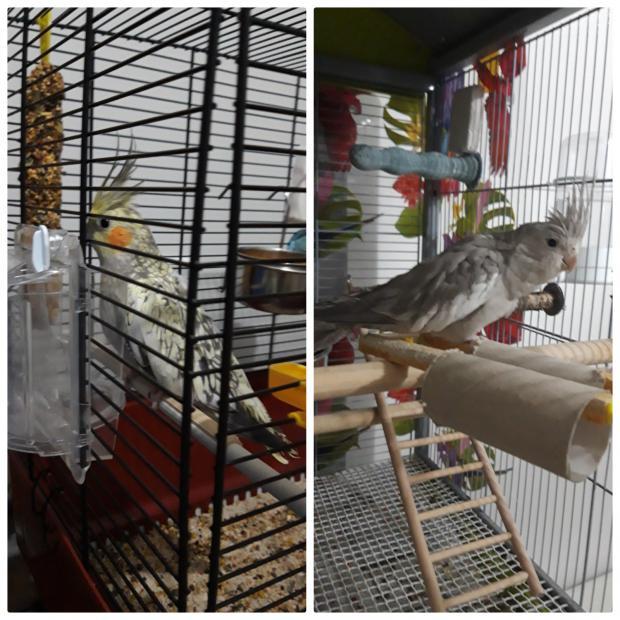 Nueva con ninfas,ayuda por favor con el comportamiento