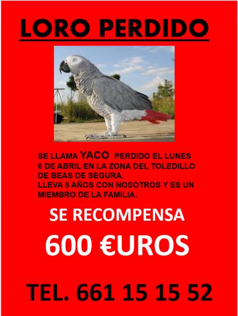 LORO YACO PERDIDO EN BEAS DE SEGURA (JAÉN)
