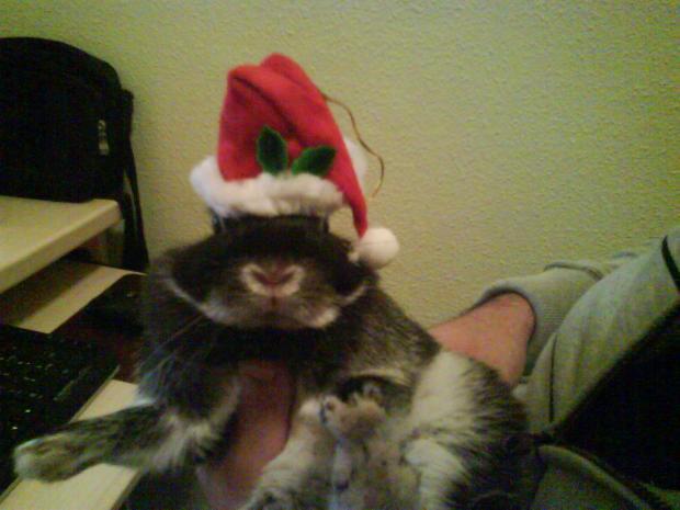 cönil os desea feliz navidad