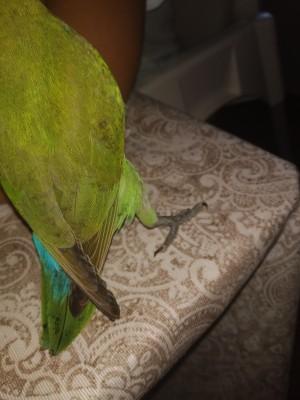 Manchitas negras en las plumas
