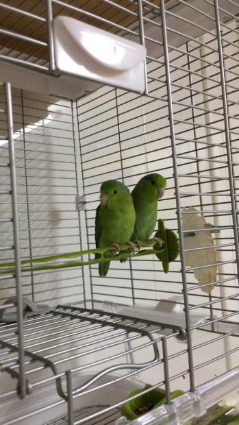 Lola y Lolo en su nueva casa!